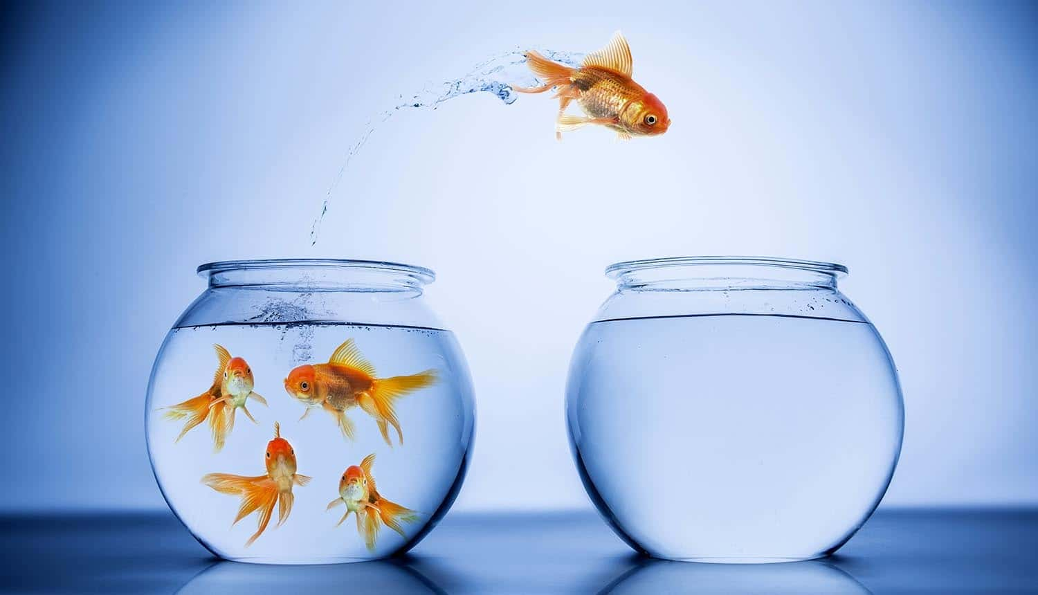 Image of goldfish jumping from one tank to another representing Brexit and what's going to change for Asia data