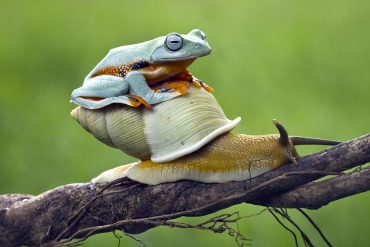 Image of a frog sitting on a snail crawling up a tree branch representing how the EU GDPR will not slow down the EU GDP