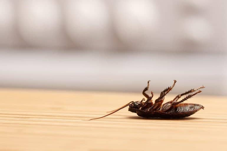 Dead cockroach on table showing the need to design right crowdsourced security testing model for bug bounties